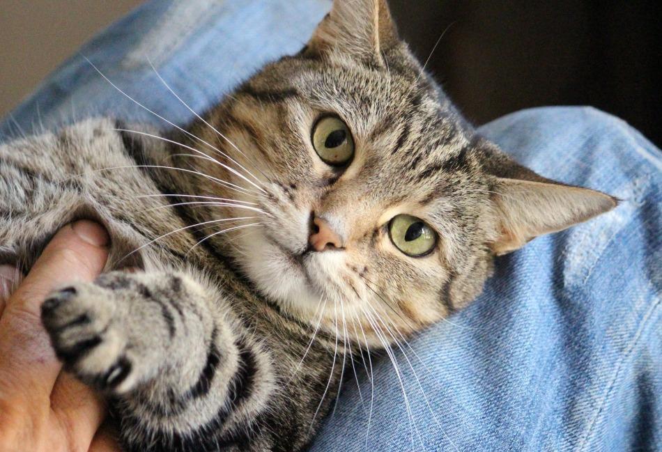 cat-1375793_1920