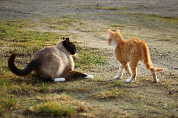 cat-1184931_1920