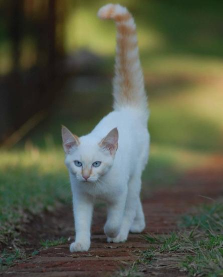 cat-191912_1920.jpg
