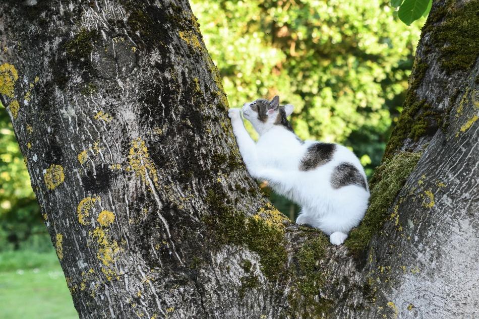 cat-2428571_1920