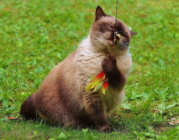 cat-783897_1920