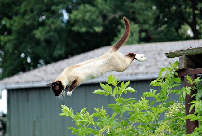 cat-1504233_1920