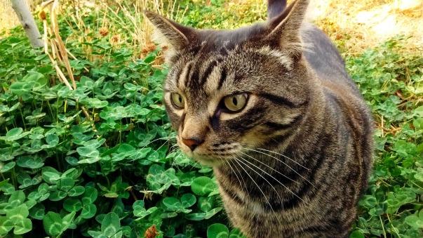 cat-2210289_1920