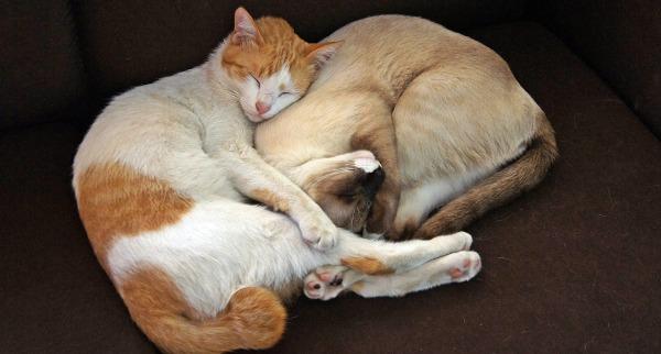 cat-2553920_1920