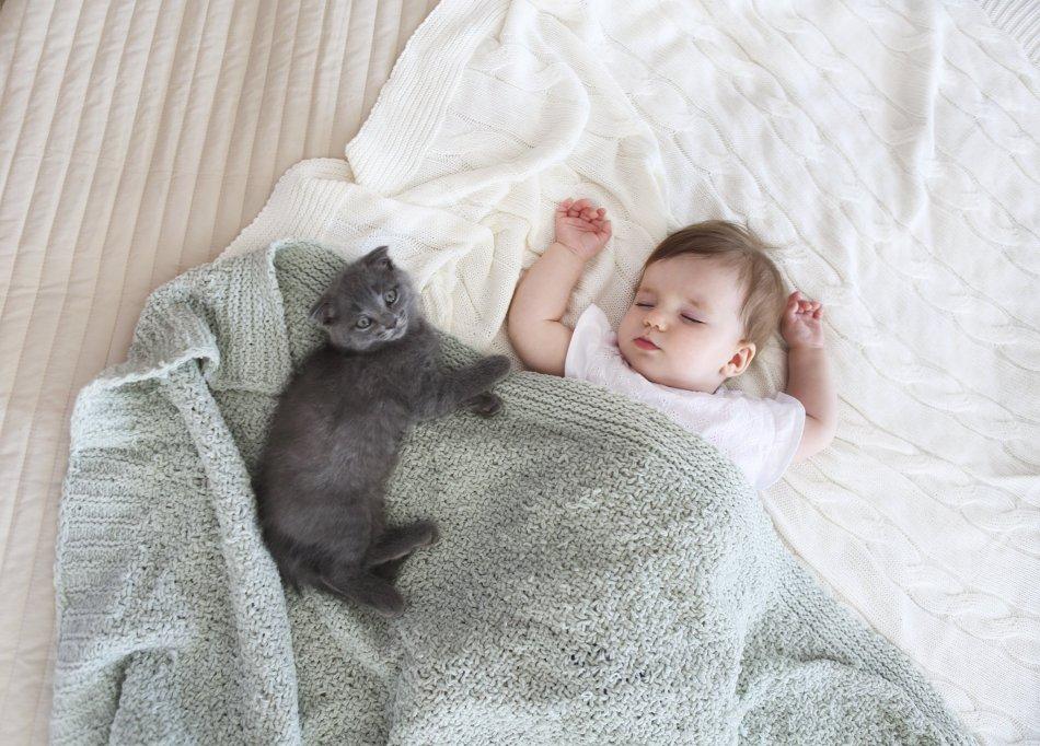 seurustelu kissojen kanssaTop 5 dating sites maailmassa